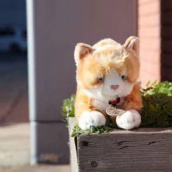 Gato de peluche pelirojo Amber Ginger