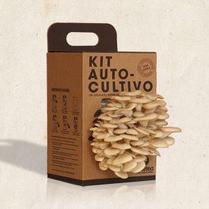 Kit autocultivo Setas Ostra