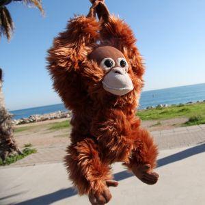 Orangután de peluche