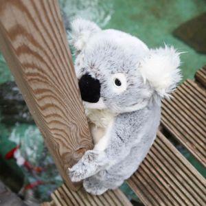 Koala de peluche